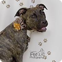 Adopt A Pet :: Cheeba - San Diego, CA