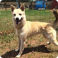 Adopt A Pet :: Summer - Indian Trail, NC