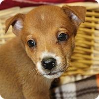 Adopt A Pet :: Topper - Waldorf, MD