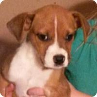 Adopt A Pet :: Chase - Leming, TX