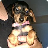 Adopt A Pet :: Heidi - Charlestown, RI
