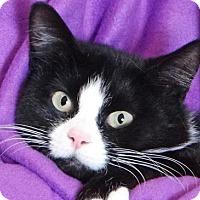 Adopt A Pet :: Ahnya - Renfrew, PA