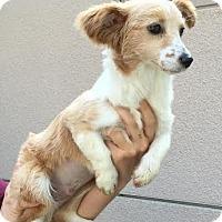 Adopt A Pet :: Jayten - San Diego, CA