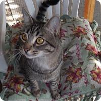 Adopt A Pet :: Tyler - Sherman Oaks, CA