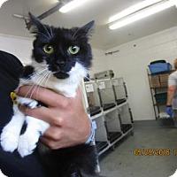 Adopt A Pet :: Jupiter - Greenville, NC