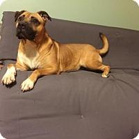 Adopt A Pet :: Madyson - Columbia, MD