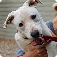 Adopt A Pet :: CASANOVA - Phoenix, AZ