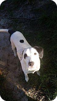 Labrador Retriever/Terrier (Unknown Type, Medium) Mix Dog for adoption in Rochester, Minnesota - Rex