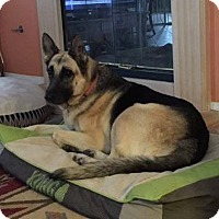 German Shepherd Dog Dog for adoption in Mira Loma, California - Duchess