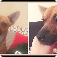 Adopt A Pet :: CHICO - Malvern, AR