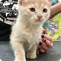 Adopt A Pet :: Michael - North Wilkesboro, NC