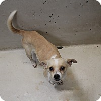 Adopt A Pet :: A35 Charlotte - Odessa, TX