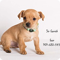 Adopt A Pet :: Sir Garath - Riverside, CA