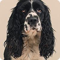 Adopt A Pet :: FRANCES - Pt. Richmond, CA