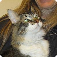 Adopt A Pet :: Mistletoe - San Jose, CA