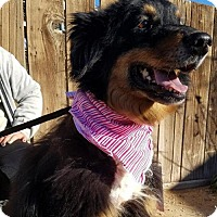 Adopt A Pet :: Flossie - Apple Valley, CA