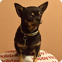 Adopt A Pet :: Tiny Nick - Lynnwood, WA