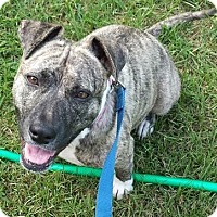 Adopt A Pet :: Pixie - Toms River, NJ