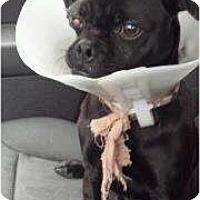 Adopt A Pet :: Manuel - Poway, CA