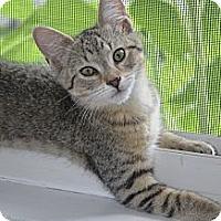 Adopt A Pet :: Calvin - Xenia, OH