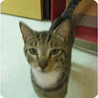 Adopt A Pet :: Snickers - Jenkintown, PA