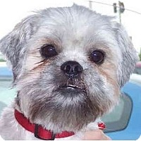 Adopt A Pet :: Remy-VA - Suffolk, VA