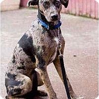 Adopt A Pet :: Marlo - Portland, OR