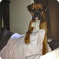 Adopt A Pet :: Rico Suave - Dayton, OH