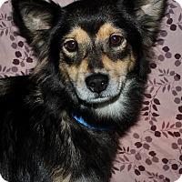 Adopt A Pet :: Cleo - Redondo Beach, CA