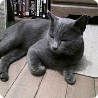 Adopt A Pet :: Rex - Colmar, PA