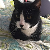 Adopt A Pet :: C-68314 Kylo - Westampton, NJ
