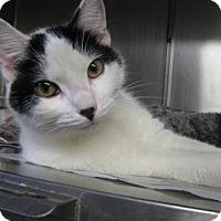 Adopt A Pet :: Carley - Voorhees, NJ