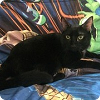 Adopt A Pet :: Ebiquity - McHenry, IL