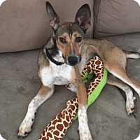 Adopt A Pet :: Tess - Atlanta, GA
