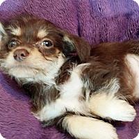 Adopt A Pet :: Remy - Lawrenceville, GA