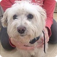 Adopt A Pet :: Mumbo - Encino, CA