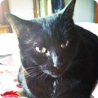 Adopt A Pet :: Aimee - Toronto, ON