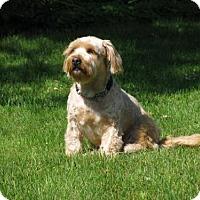 Adopt A Pet :: Ruffles 3139 - Toronto, ON