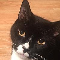 Adopt A Pet :: Oreo - Montreal, QC