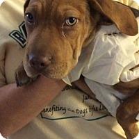 Adopt A Pet :: Buckeye - Lewisburg, TN