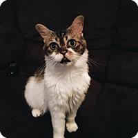 Adopt A Pet :: Smush Smush (foster care) - Philadelphia, PA