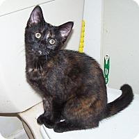 Adopt A Pet :: Cassie - Hedgesville, WV