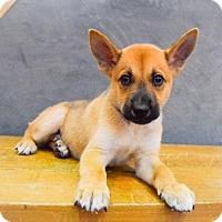 Adopt A Pet :: Shawn - Sacramento, CA