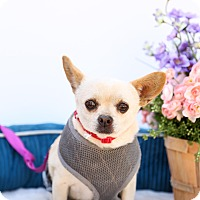 Adopt A Pet :: Wally - Auburn, CA