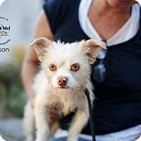 Adopt A Pet :: Carson - Castaic, CA
