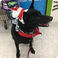 Adopt A Pet :: Hershey - Aurora, IL