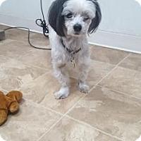 Adopt A Pet :: Charlie - Chico, CA