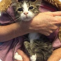 Adopt A Pet :: Milton - Tampa, FL