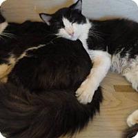 Adopt A Pet :: BABY & HUSKY - Corona, CA