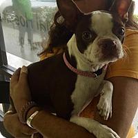 Adopt A Pet :: Lua (Luna) - West Palm Beach, FL